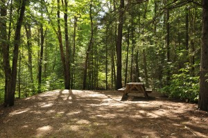 Beautiful campsites in the woods with no hookups